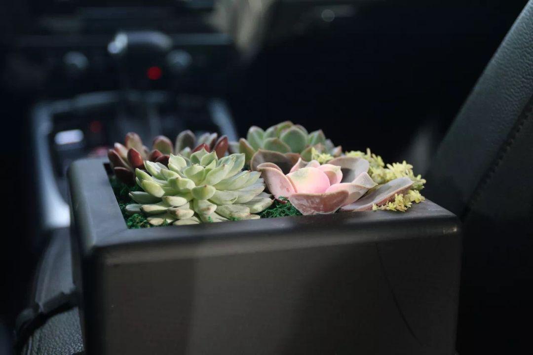 滴滴豪华车内多肉植物